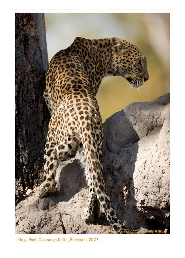 Leopard3247_9-14-07