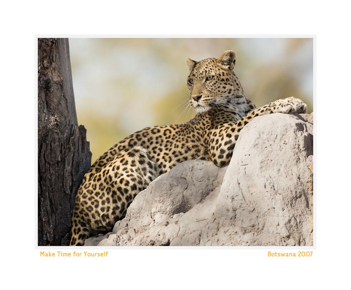 Leopard3344-Oct5-2013