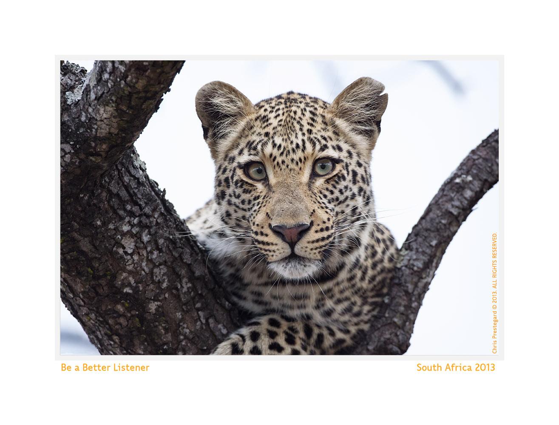 Leopard462-Oct8-2013