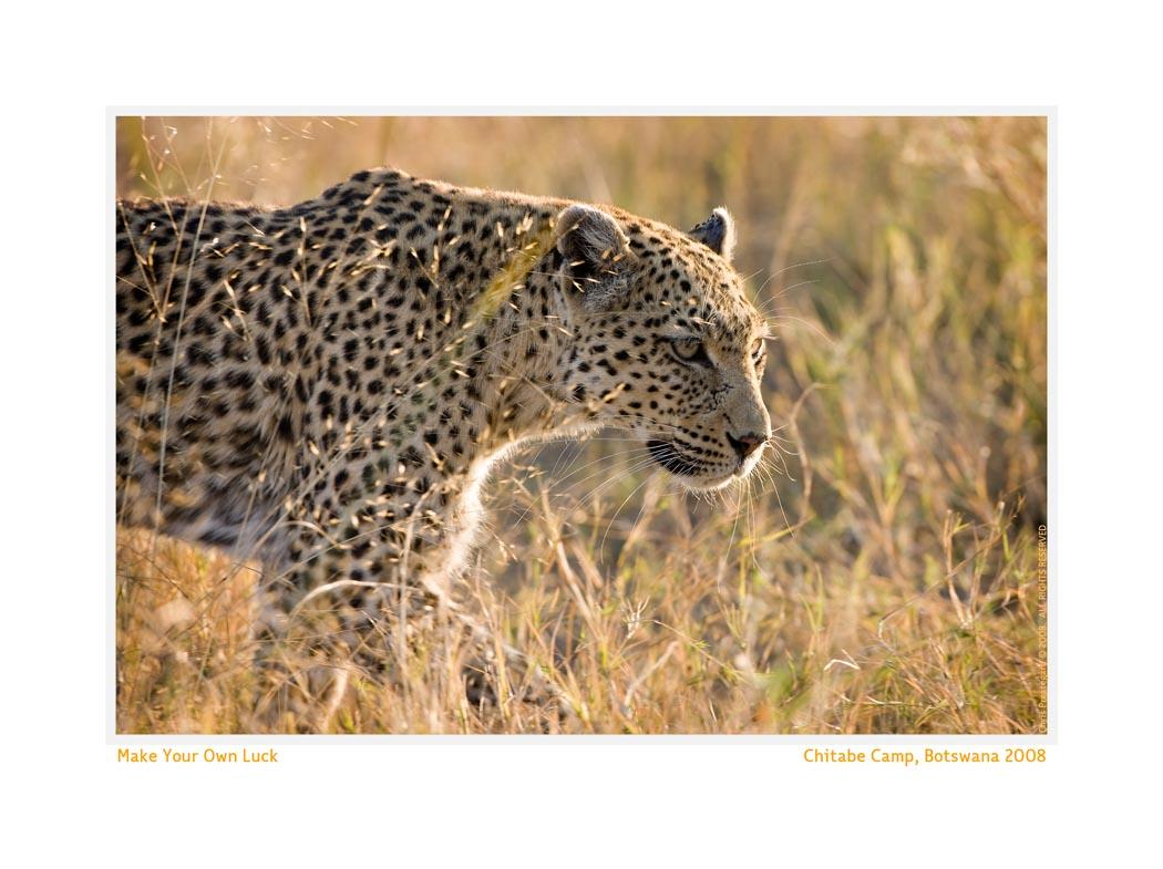 Leopard546_Aug23b-08