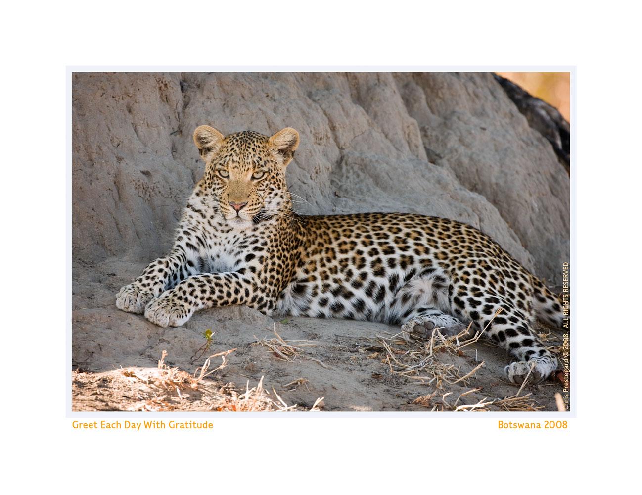 Leopard884-Oct5-2013