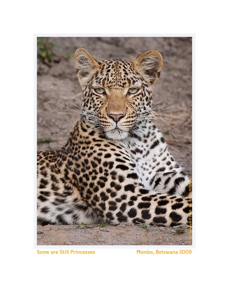 Leopard8909c_Sept28-2011