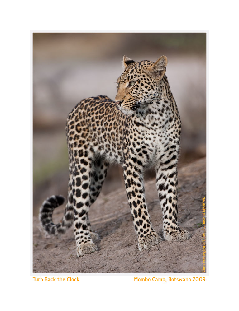 Leopard9082d-Sept28-2011
