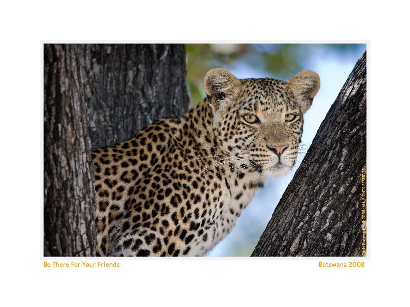 Leopard996-Oct5-2013