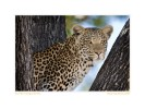Leopard996b_Aug23-08