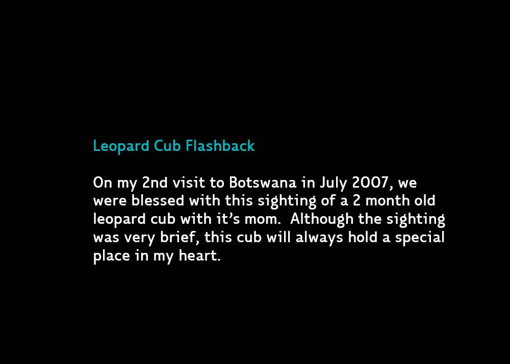 LeopardCub-Chitabe2007