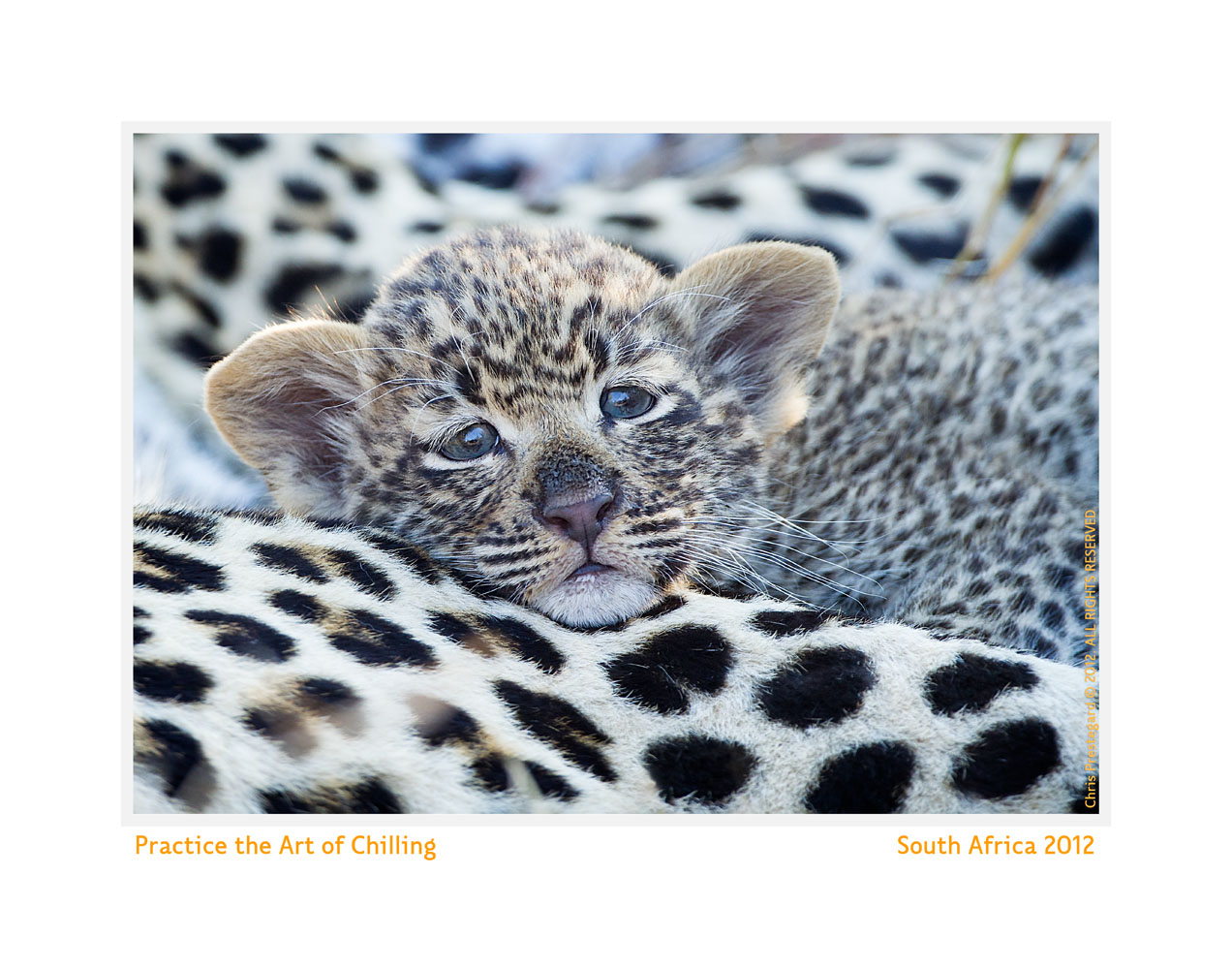 LeopardCub2977-Oct5-2013