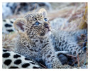 LeopardCub3097-Jul14-2012