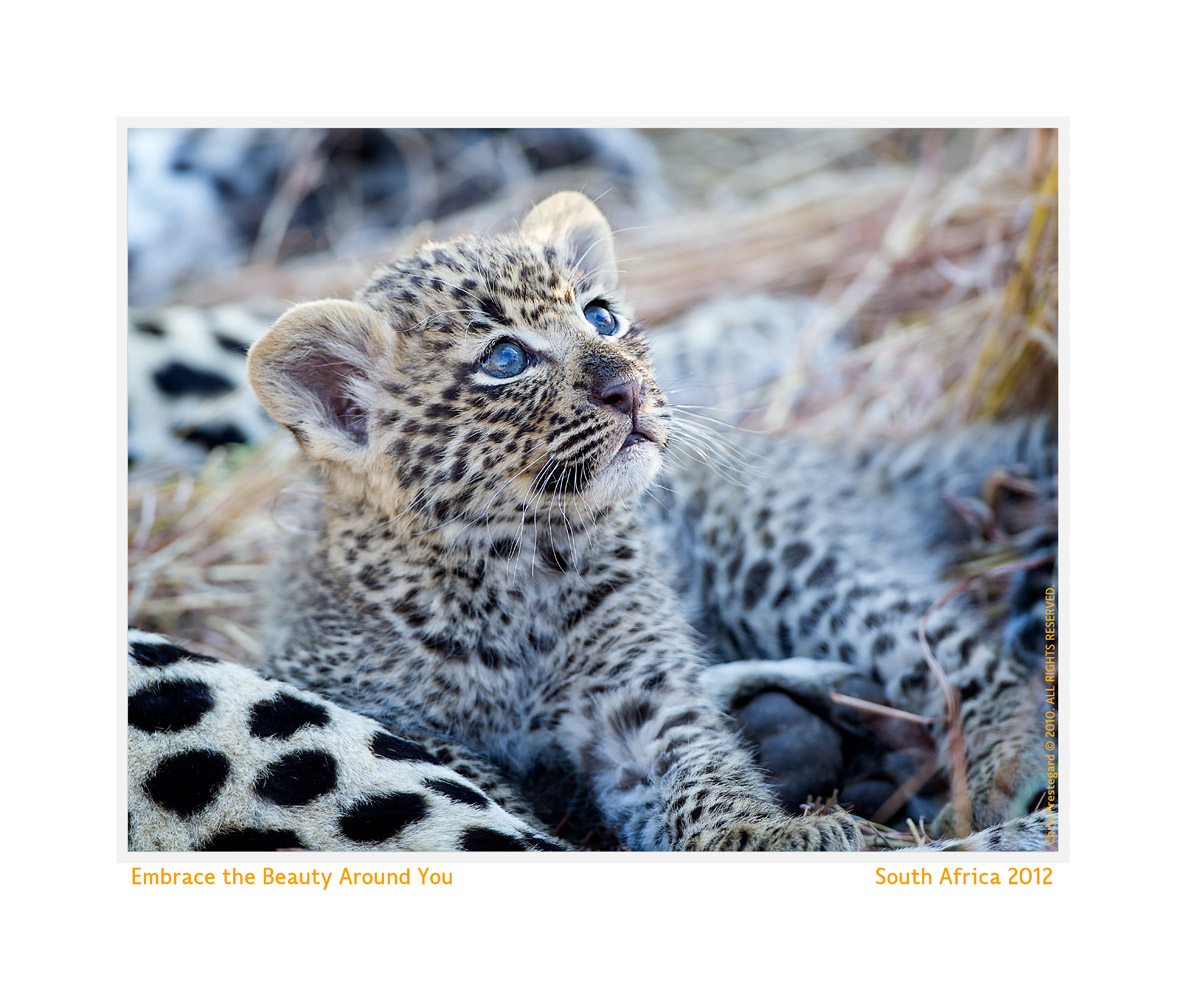 LeopardCub3097-Oct5-2013