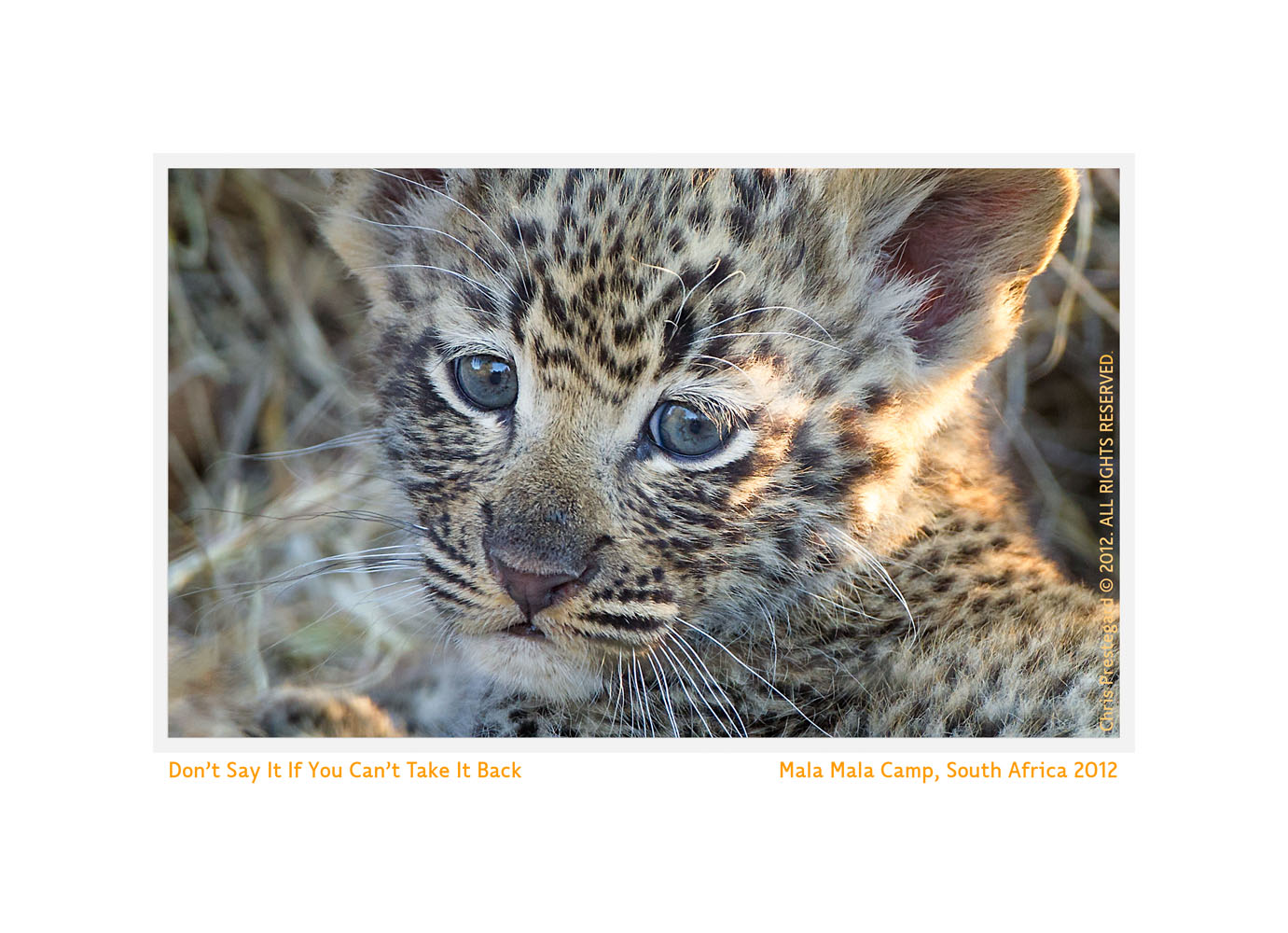 LeopardCub3470-Oct9-2012
