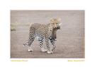 Wildliferhythms in Ndutu Feb. 2013