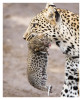 LeopardCub7232-Oct4-2013