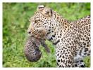 LeopardCub7344-Oct3-2013