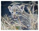 LeopardCub9961-Jul20-2012