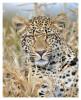 LeopardKeisha6444_Aug14-2011