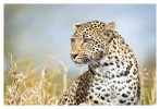 LeopardKeisha7013_Aug14-2011