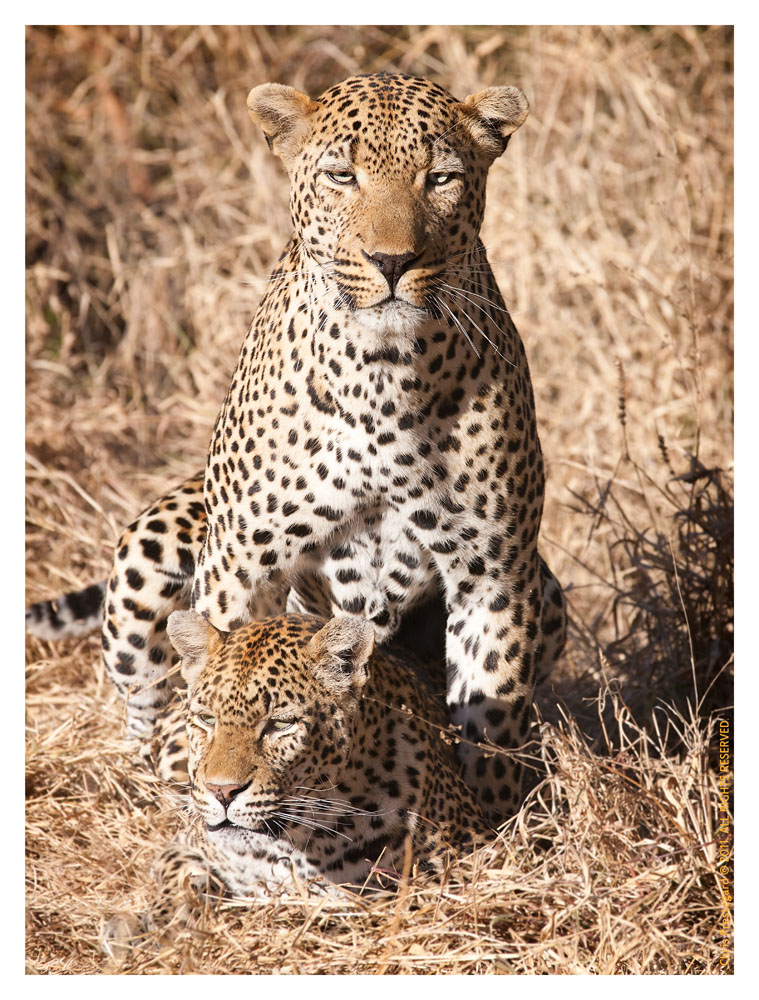 LeopardKikiEm6087_Aug11-2011