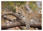 LeopardKisha6755_Aug11-2011