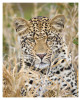 LeopardKisha6866_Aug11-2011