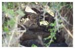 LeopardTwins3833-Oct14-2013
