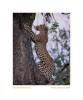 Leopard_9228Dark-Nov24-09