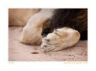 Lion1911Trust_Jun9-09