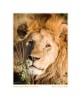 Lion4212c_Aug21-08