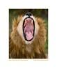 Lion624d_Aug21-08