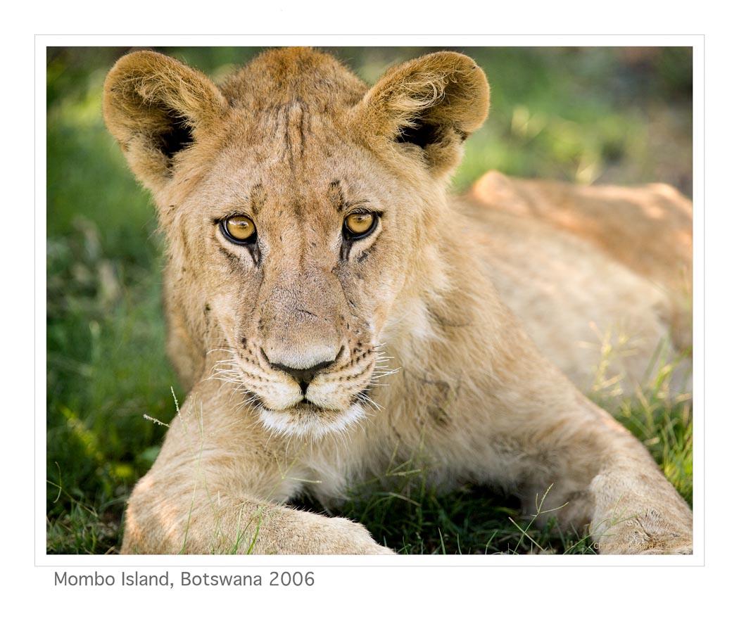 Lion6917b_9-15-07