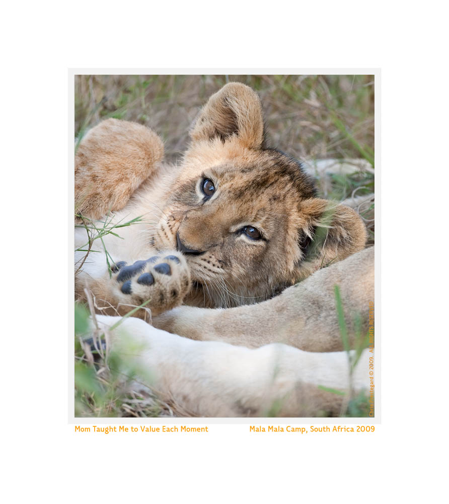 LionCub1155Value_Jun9-09
