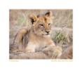 LionCub259Boredb_Jun13-09