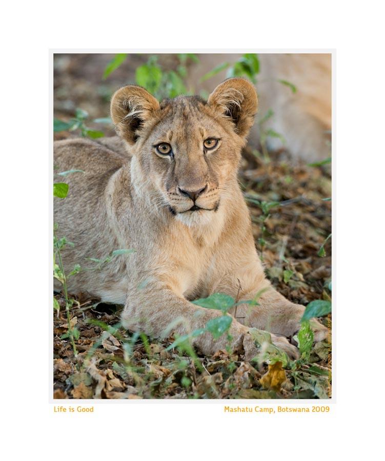 LionCub3810Life_May28-09