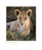 LionCub3908_11-14b-07_copy