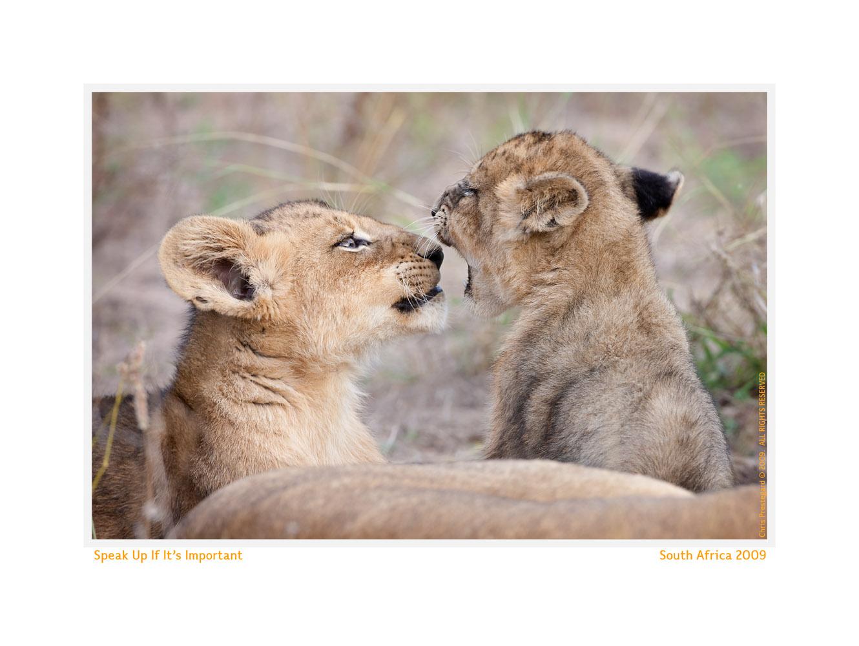 LionCub400-Oct5-2013