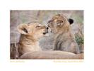 Wildlife Rhythms ™  Mala Mala in Sabi Sands, South Africa 2009