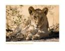 LionCub5626_9-17-07