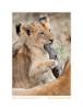 LionCub593Fun_Jun11-09