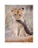 LionCub595Strong_Jun11-09