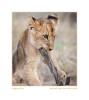 LionCub608Stick_May31-09