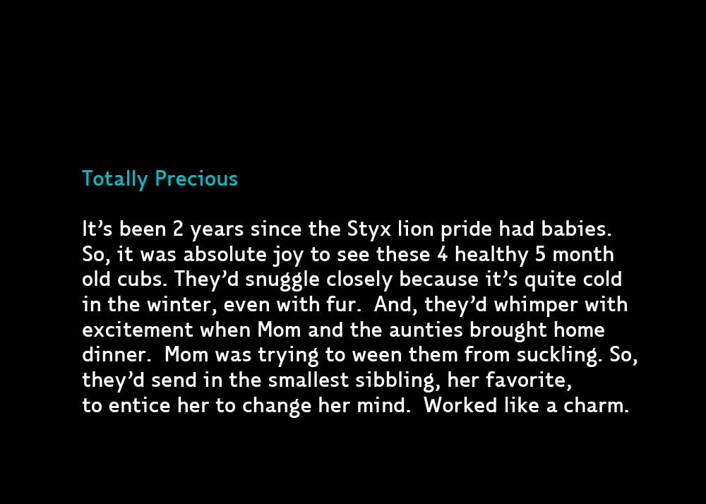 LionCubs2