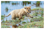 Lion cubs at Ndutu, Tanzania Feb. 2019