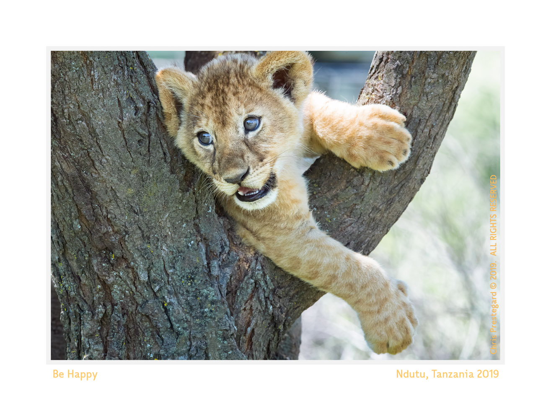 Lion cubs at Ndutu, Tanzania Feb. 2016