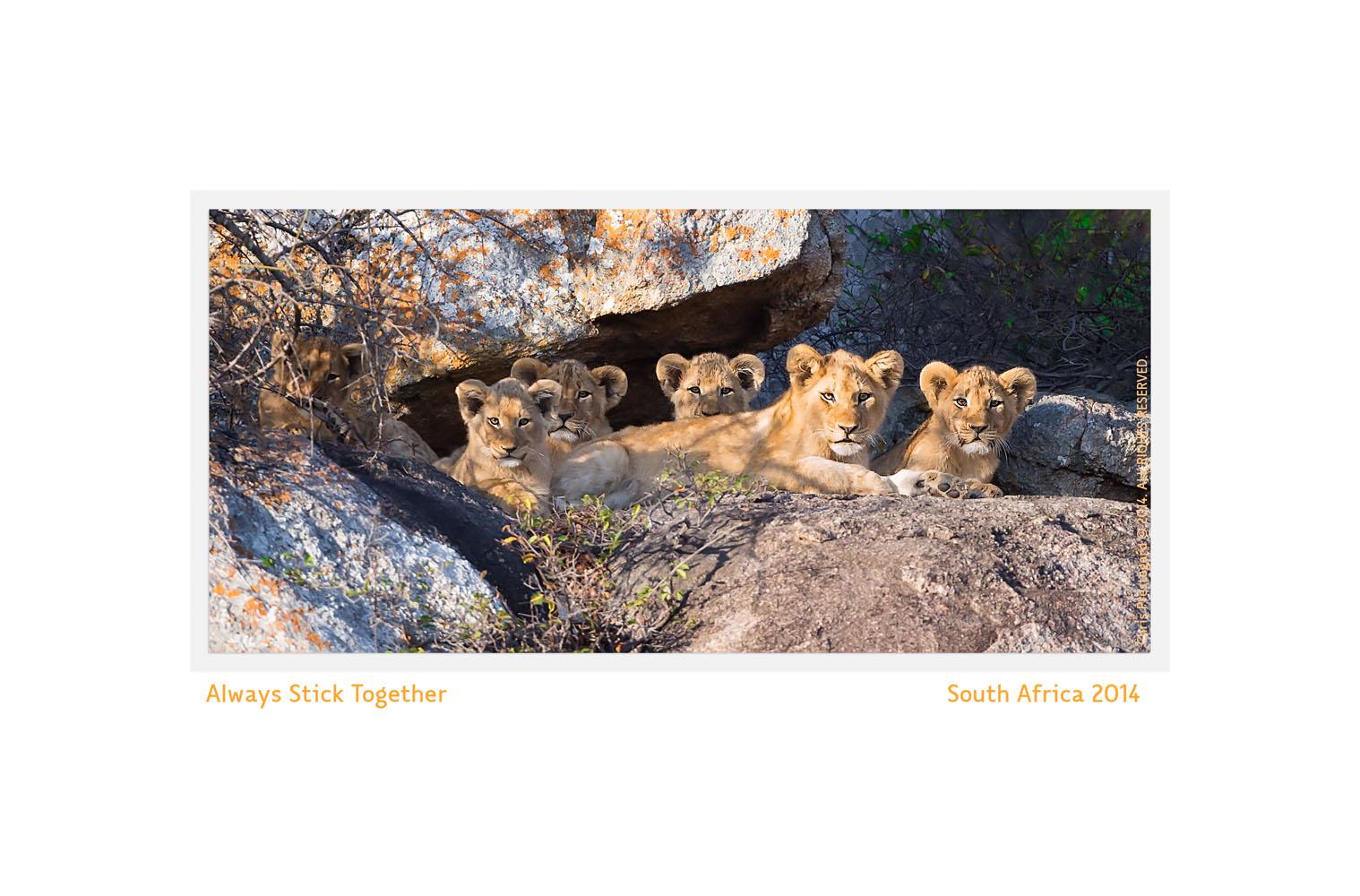Wildlife Rhythms ™  Mala Mala, South Africa 2013