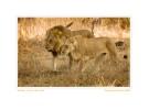 LionKings3409_Aug16-08