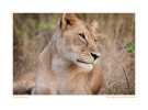LionMom176Kids_May25-09