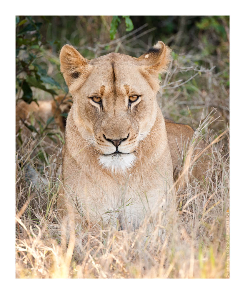 Lioness2977Look_Aug18-2010