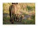 LionessCubs3884_11-13-07
