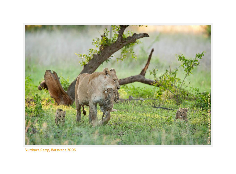 LionessCubs3991Scenic_Aug29-2010