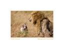Lions7155f_Aug21-08jpg