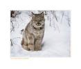 Lynx5121b_12-24-07